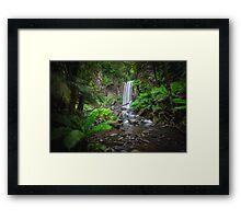 Lushness of the Rain Forest Framed Print