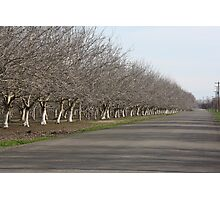Winter Orchards Photographic Print