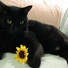 Black Cat Clutching Sunflower by Liesl Gaesser