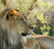 The African Lion  by Saija  Lehtonen