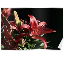 Blackbird - Asiatic Lily Poster