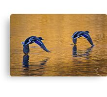 Mallard Ducks Skimming Across Autumn Lake 2 Canvas Print