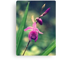 Purple Frilly Orchid Canvas Print