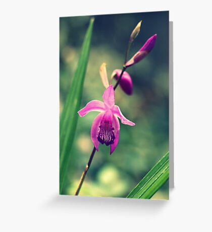 Purple Frilly Orchid Greeting Card