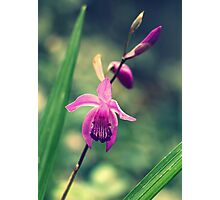 Purple Frilly Orchid Photographic Print