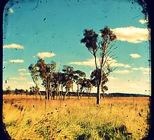 Eucalyptus Trees Through The Viewfinder (TTV) by Kitsmumma
