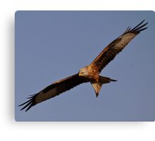 Red Kite Soaring Above Blue Sky Canvas Print