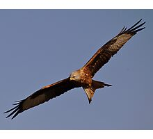 Red Kite Soaring Above Blue Sky Photographic Print