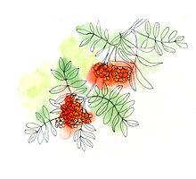 Rowan berry Photographic Print
