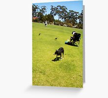 The Continuing Standoff Between Magpies And Jesse Greeting Card