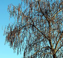 Tree against the Blue Sky by brijo