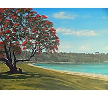 Pohutukawa - New Zealand Christmas Tree Photographic Print