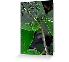 Glowing in the Rain Greeting Card