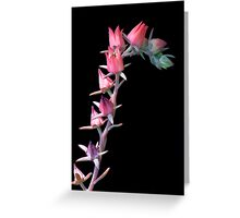 Desert Flowers at Night Greeting Card