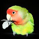 Christmas Bird by Ticker