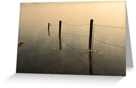 poles in misty water by Nicole W.