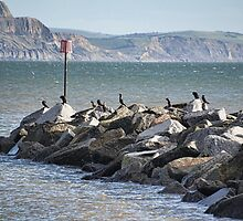 Cormorants Rock by lynn carter