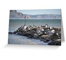 Cormorants Rock Greeting Card