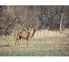 Animal you would never think to see in Pa. Photographic Print
