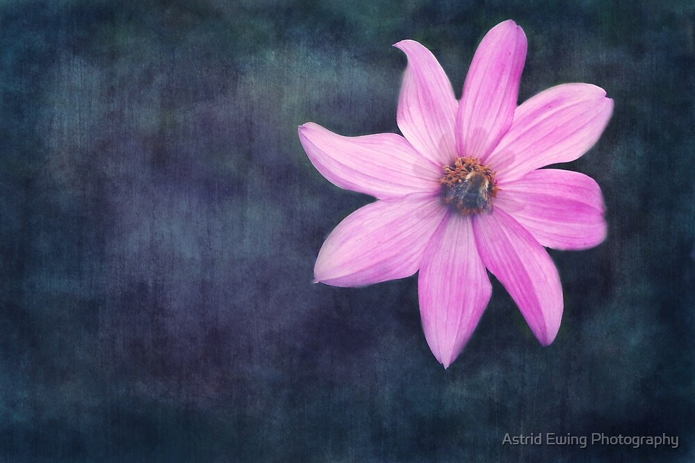Bee on Pink Dahlia by Astrid Ewing Photography