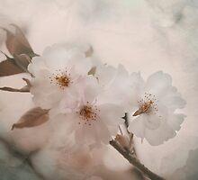 Dawn by Sarah C. Frerich