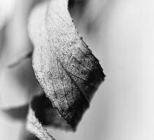 Curled Elegance... (bw) by Bob Daalder