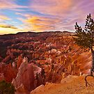 Majestic Morning by Marty Straub