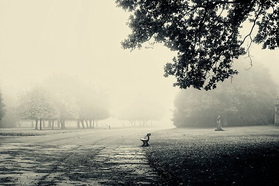 Misty morning by Trish  Anderson