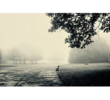 Misty morning Photographic Print