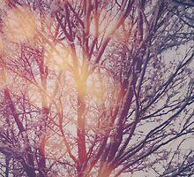 All the pretty lights (1) by Karin Elizabeth