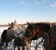 Kissing Horses by Liesl Gaesser