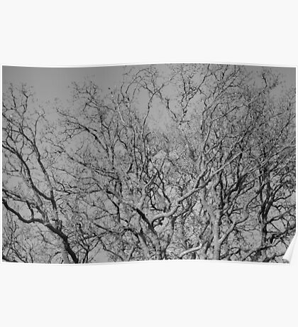 Bare Branches of Winter Poster