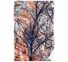 Shadowy Branches Poster