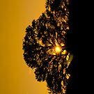 Sun Tree by Armando Martinez