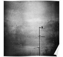 Black dove Poster