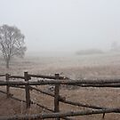 On the farm by Angela King-Jones