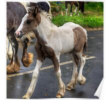 Foal at the Fair Poster