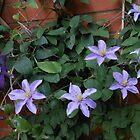 Quiet Beauty - Mauve and Purple Clematis Blossoms by SunriseRose