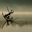 Birds in the mist by lisapowell