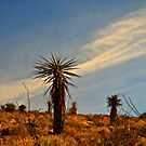 "Cactus on ""A"" Mountain by Sheryl Gerhard"