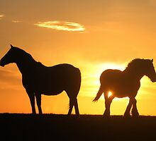 Horse silhouette by Paul Boyle