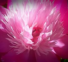 Pink And White Peony by kahoutek24