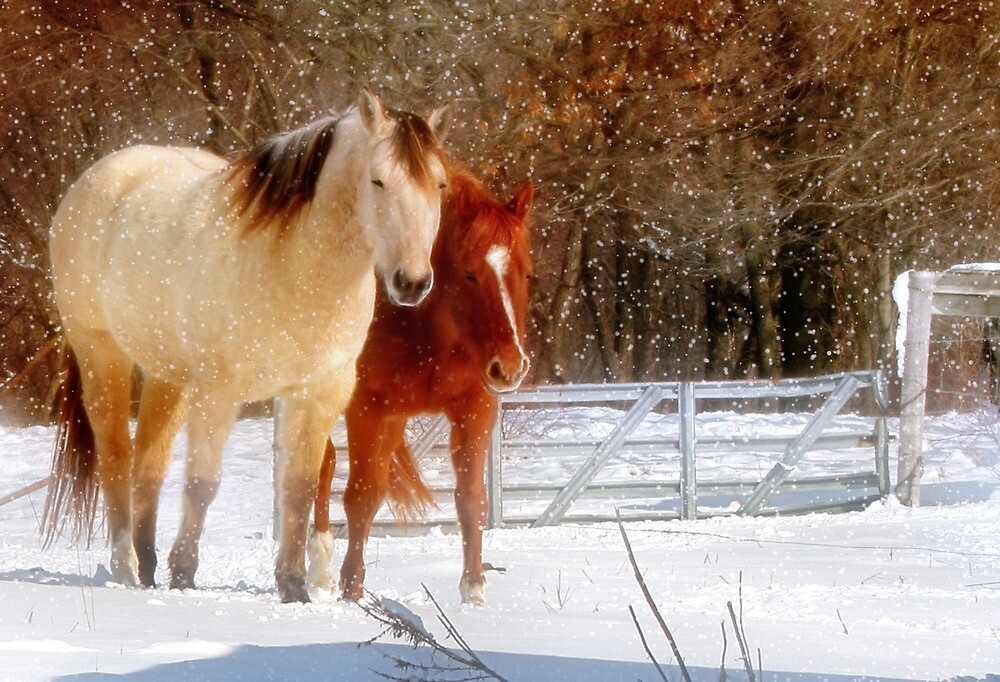 Baby, it's Cold Outside! by Nadya Johnson