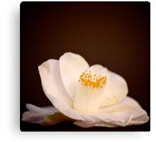 Camellia - Toy Camera style Canvas Print