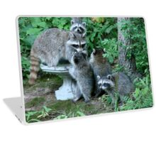 Raccoon Mom with 4 Kits Laptop Skin