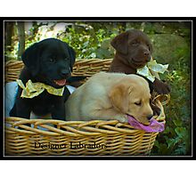 Three in a Basket! Photographic Print