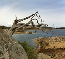 """Ghost tree on Lake Eucumbene"" by eucumbene"