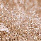 sparkle & light by Jean Poulton