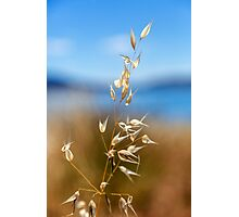 Pod by the Lake Photographic Print