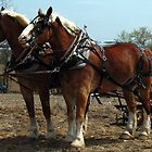 Clydesdale Tractor Pull by Liesl Gaesser